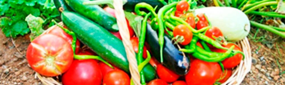 Aliments I Bon Temps. Bloc De La Cesca